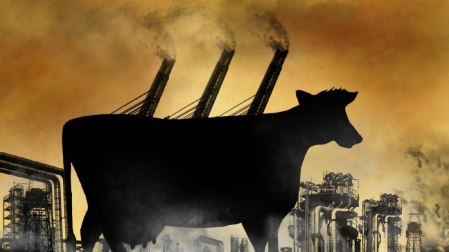Cattle-Global-Warming-Methane-Emissions-650x459