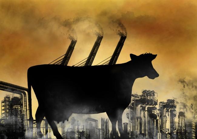 Cattle-Global-Warming-Methane-Emissions-650x459