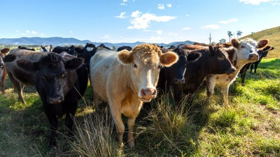 Eating meat has 'dire' consequences for the planet, says report