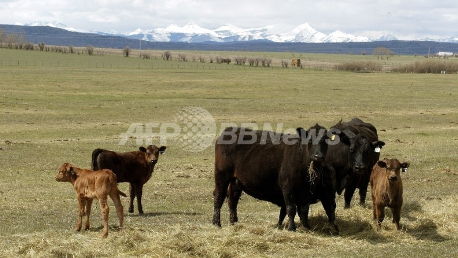 「温暖化ガス排出食」の王者は牛肉、畜産分野の約80%