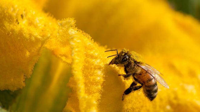 Nature crisis Humans threaten 1m species with extinction