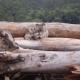 ausralia deforestation
