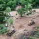 argentina-deforestation